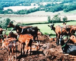 La Ferme Des Coteaux - Massilly - Le quotidien d'un élevage de chèvres